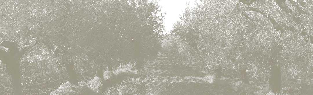 Olivlenbaumhain